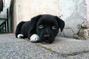 dog, animal, tired