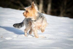 dog, small, winter